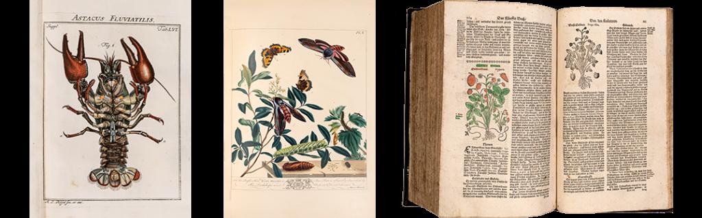 Alte Bücher Naturwissenschaften, Kräuterbücher, Blumenbücher, Insektenbücher, alte Tierbücher im EOS Buchantiquariat in Zürich